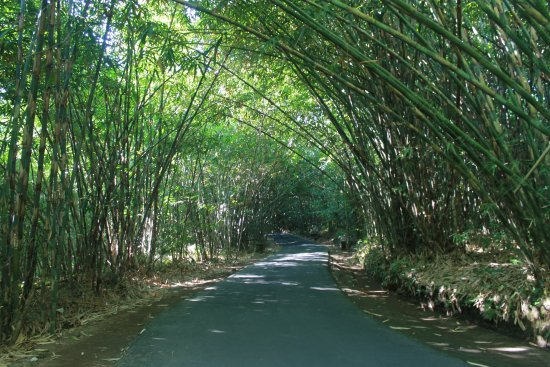hutan bambu desa penglipuran