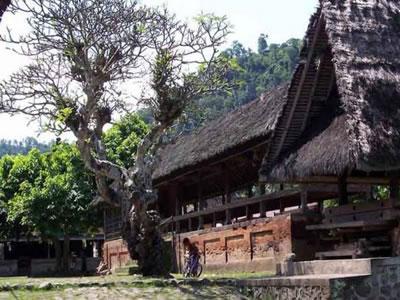 wisata desa tenganan